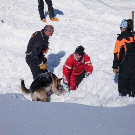 Photographie de reportage - Chiens d'avalanche