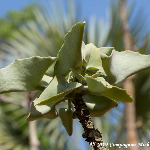 Orchidées Madagascar